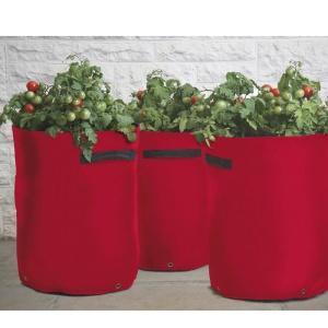 tomat-odlingssack