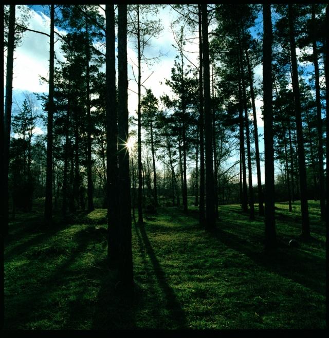 skog liten ny
