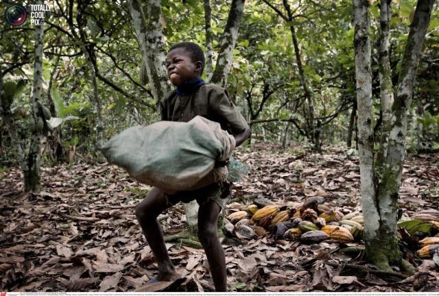 cacao-child-labor-ivory-coast